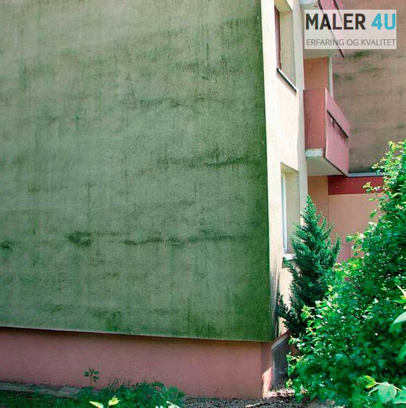 Bergen Sotra Askoy,Grønne alger på fasaden